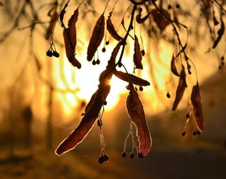Фото на телефон осень, деревья