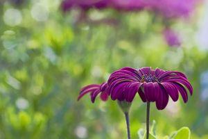 Фото бесплатно цветочек, лепестки, крупным планом