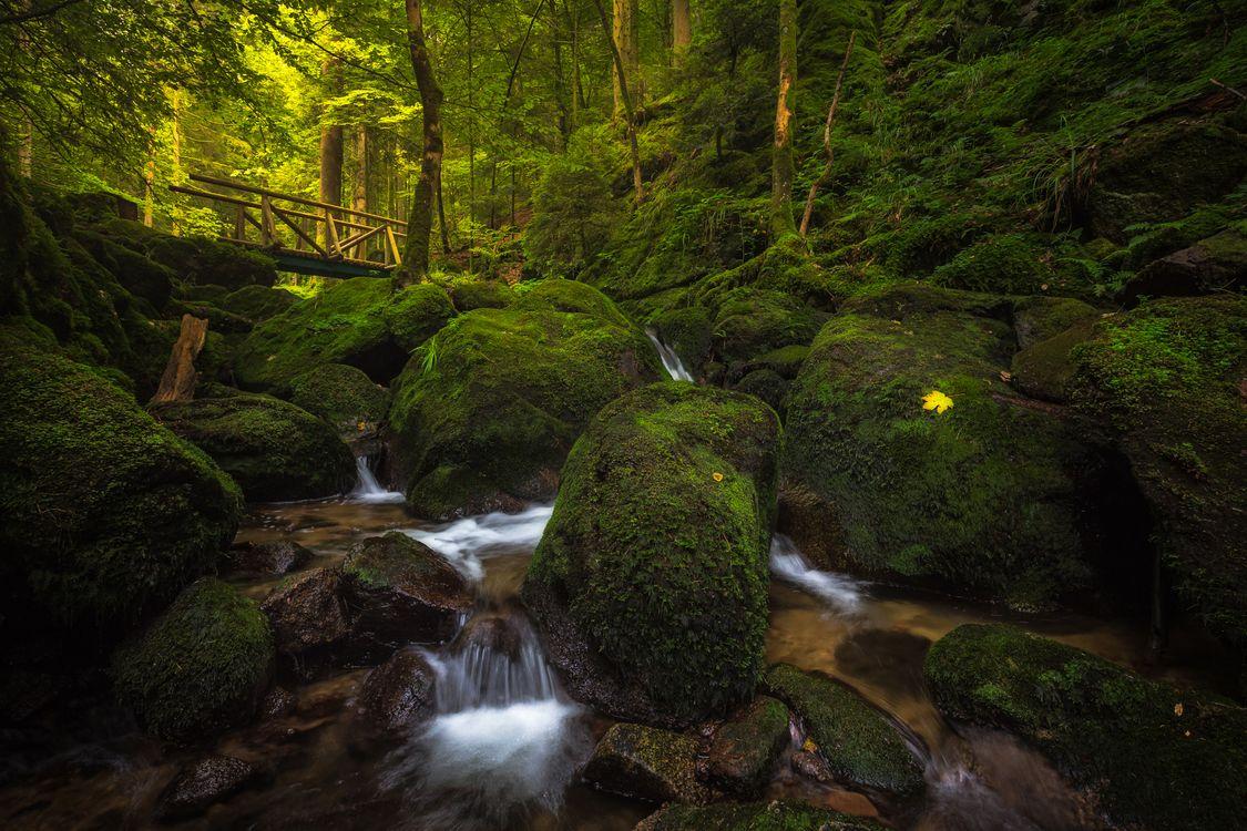 Фото бесплатно creek, Gertelbach Waterfall, Schwarzwald, Baden-Wurttemberg, Germany - на рабочий стол