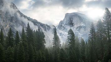 Фото бесплатно туман, горы, новогодние елки