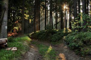 Фото бесплатно лес, солнце, тропинка