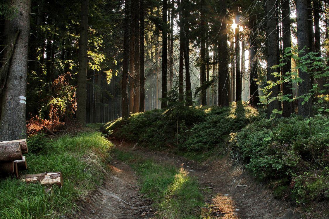 Фото бесплатно лес, солнце, тропинка - на рабочий стол