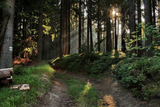 Заставки лес, солнце, тропинка