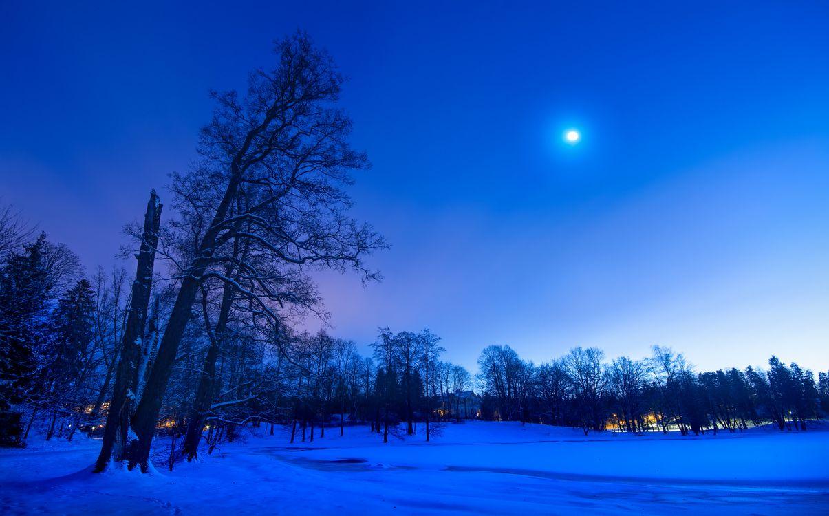 Фото бесплатно ночь, луна, зима, снег, парк, деревья, пейзаж, пейзажи