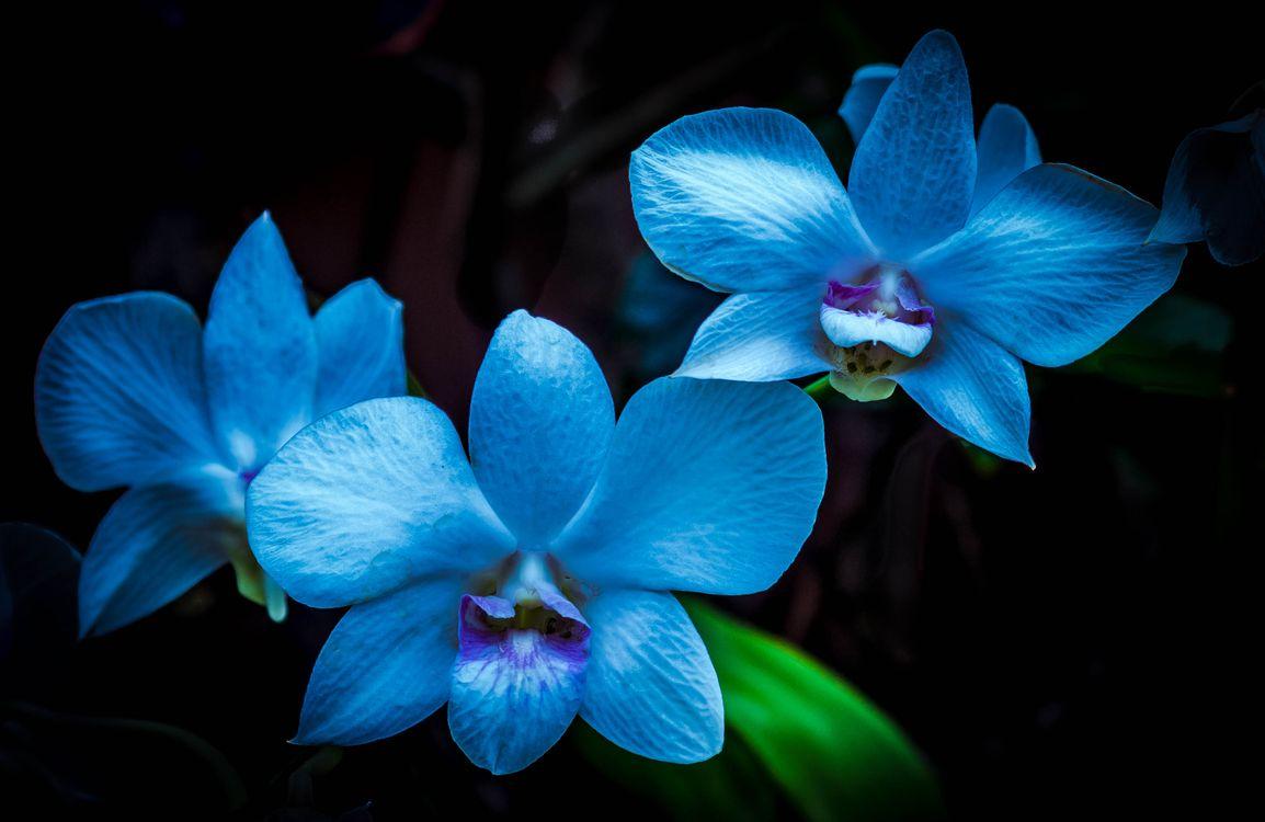 Фото бесплатно цветок, черный фон, орхидеи - на рабочий стол