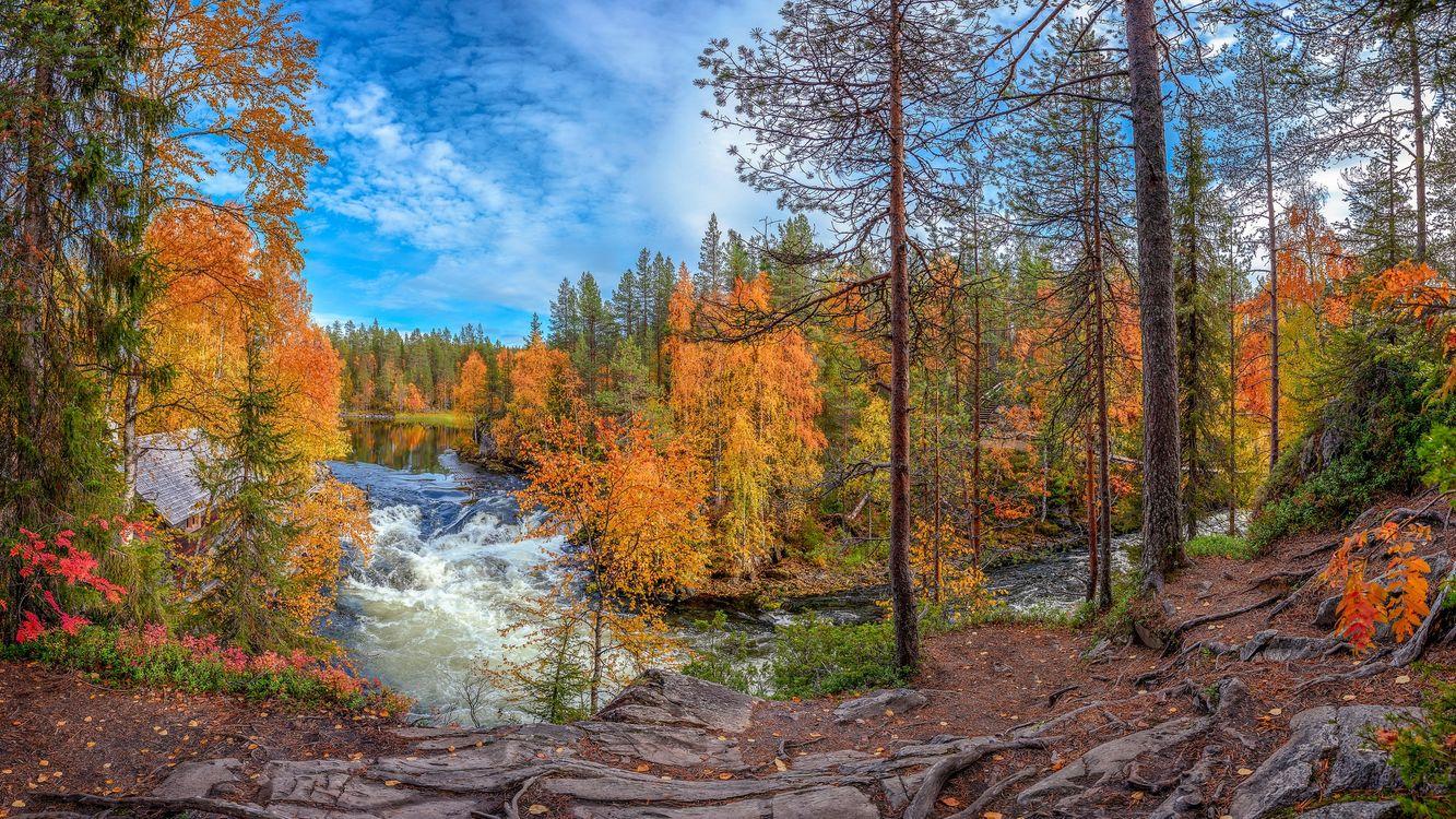 Фото бесплатно осень, Река Киткайоки, Куусамо, Juuma, Suomi, деревья, лес, река, поток, Финляндия, пейзаж, пейзажи