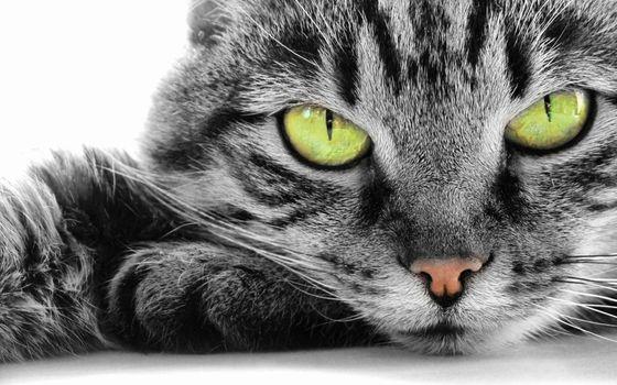 Photo free animals, cats, contrast