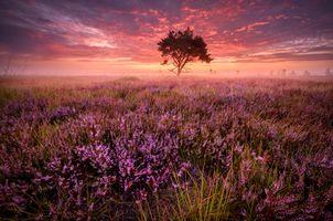 Фото бесплатно лавандовое поле, закат, поле