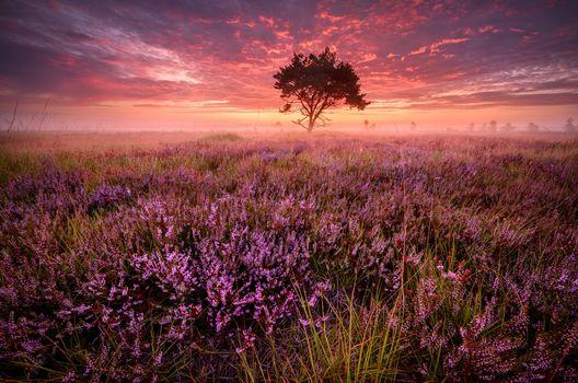 Photo free lavender field, sunset, field