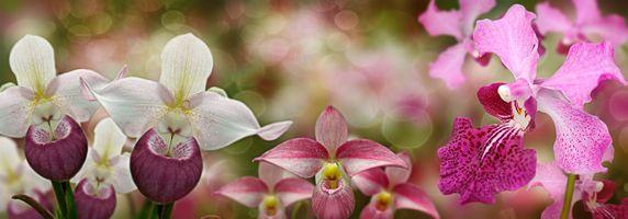 Photo free panorama, macro, orchids