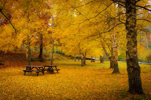Photo free fall leaves, bench, table