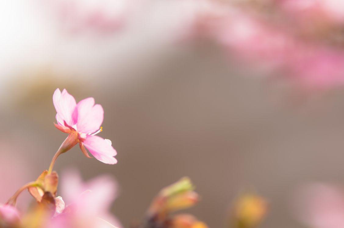 Фото бесплатно красочные, цветы, макро - на рабочий стол