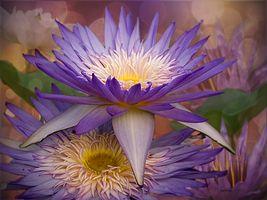 Картина из водяных лилий