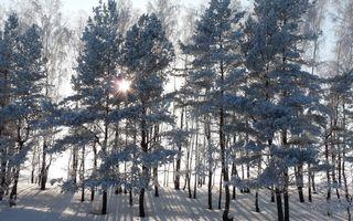 Деревья в снегу и солнечные лучи