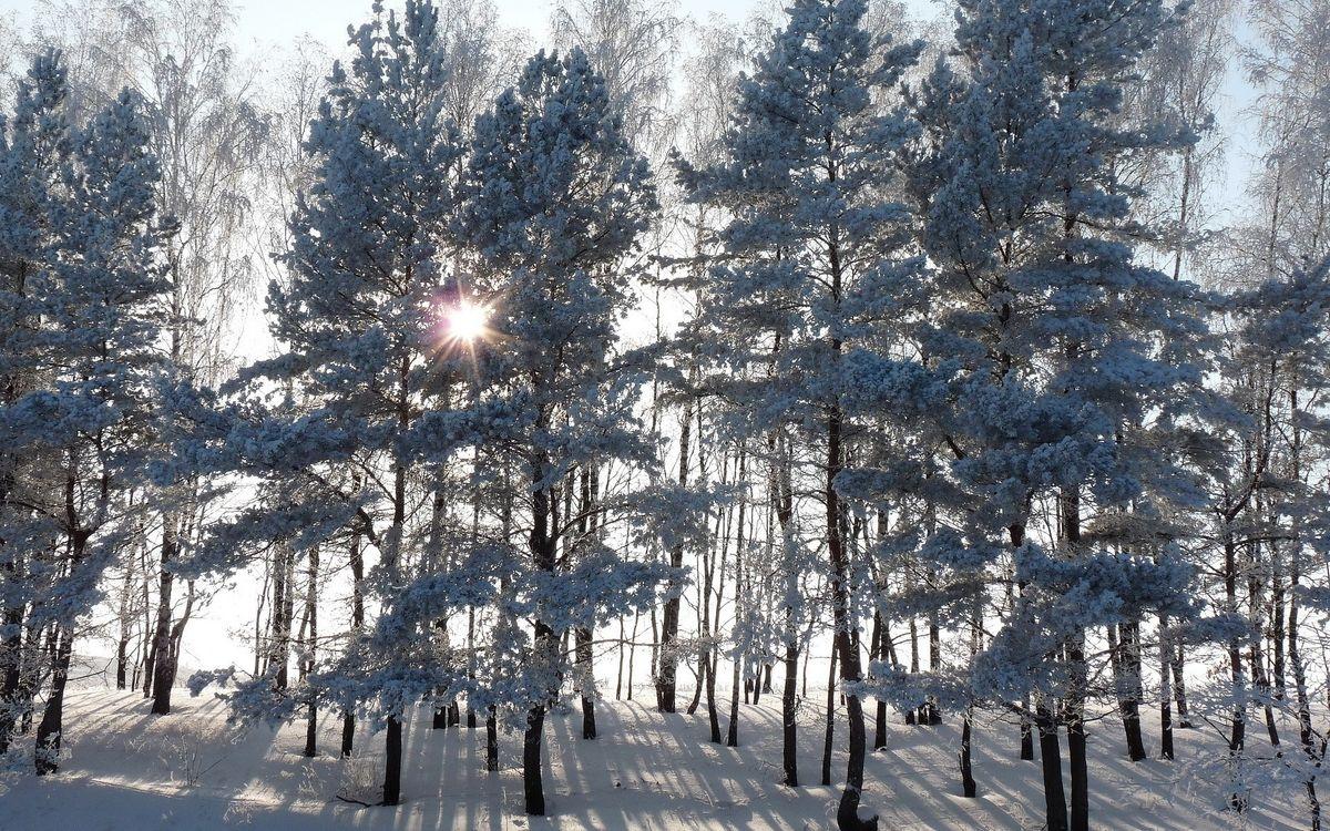 Деревья в снегу и солнечные лучи · бесплатное фото