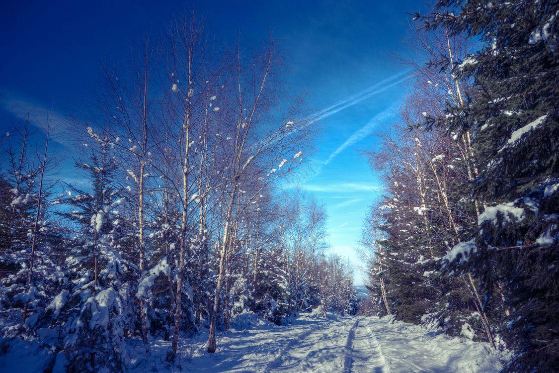Зимняя лесная дорога · бесплатное фото
