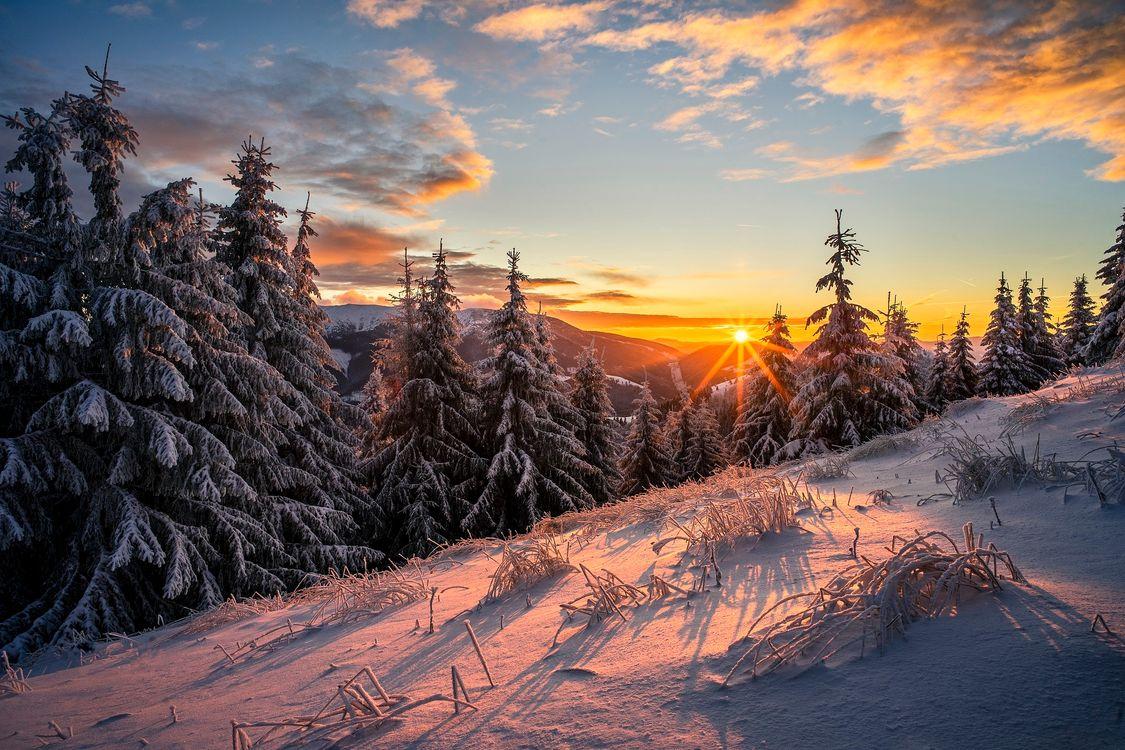 Фото бесплатно солнечный свет, природа, снег - на рабочий стол
