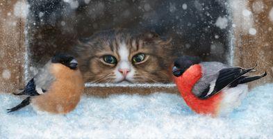 Фото бесплатно кот, птицы, снегири, взгляд, охота, art