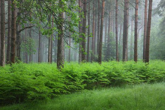 Бесплатные фото лес,деревья,туман,утро,природа,пейзаж