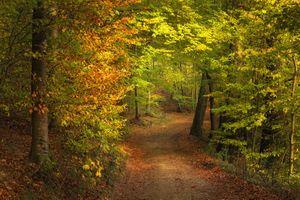 Бесплатные фото осень,лес,деревья,тропинка,дорога,краски осени,осенние краски