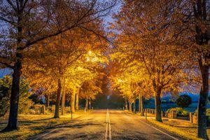 Бесплатные фото осень,сумерки,дорога,деревья,освещение,фонарь,иллюминация