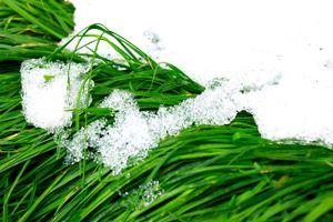Фото бесплатно травы, снег, зелень