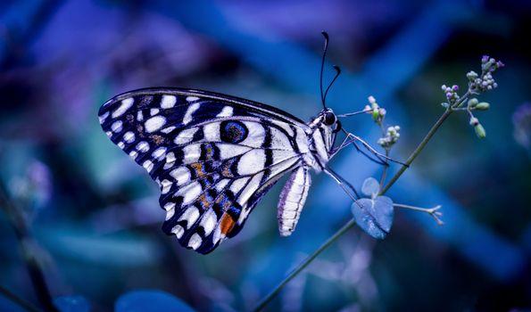 Фото бесплатно бабочка, травинка, растение