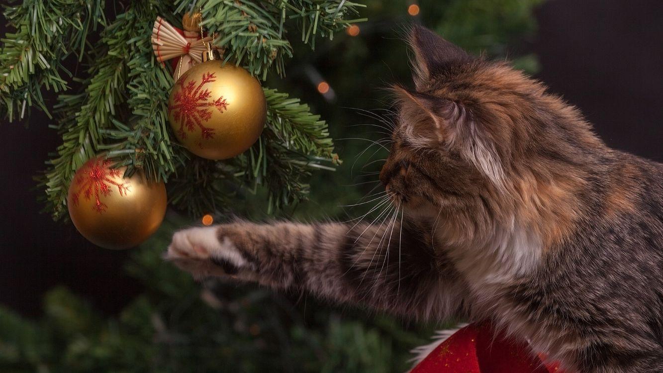 Фото бесплатно кот, пушистый, рождественские украшения - на рабочий стол