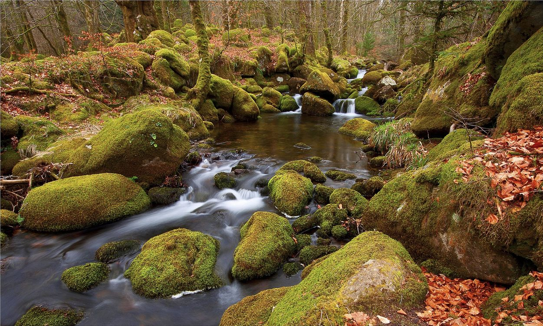 Фото бесплатно природа, ручей, мох - на рабочий стол