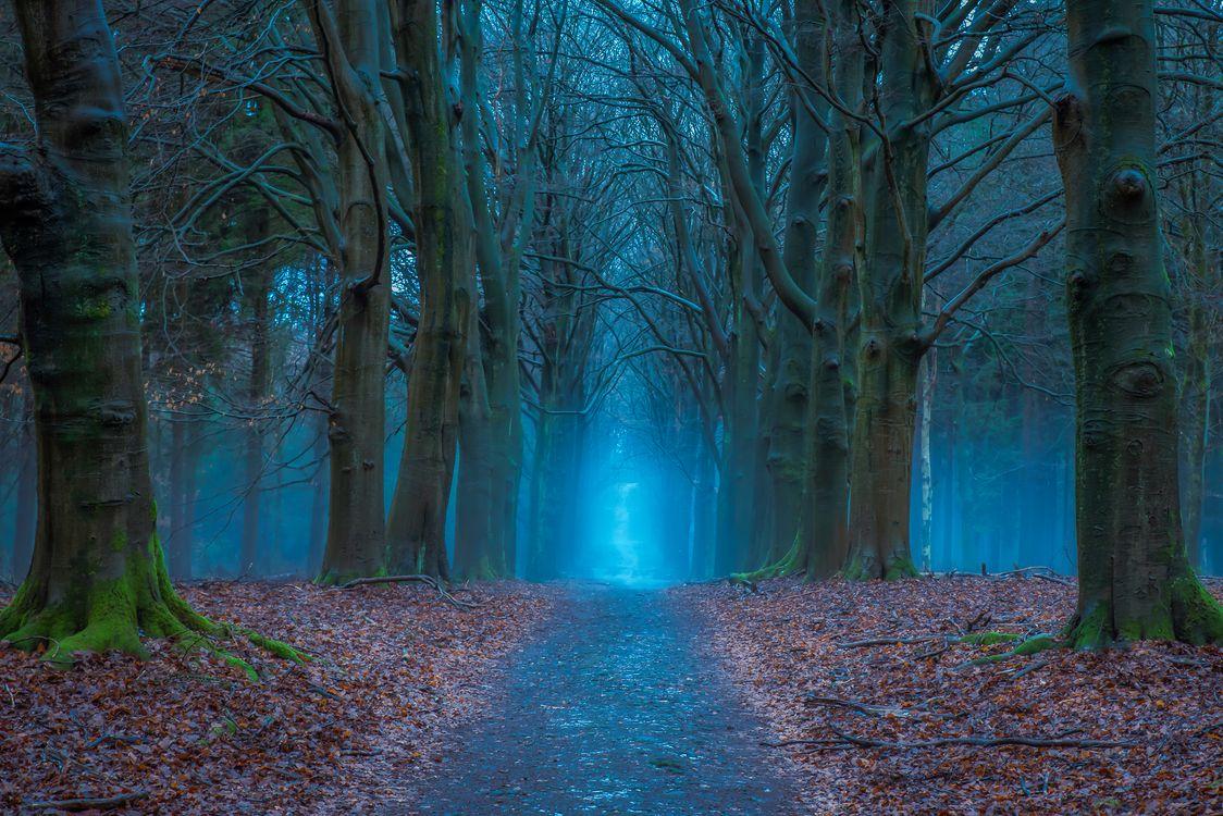 Фото бесплатно осень, лес, сумерки, дорога, деревья, туман, природа, пейзаж, пейзажи