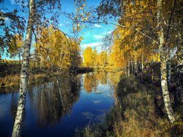 Фото бесплатно Осенью листва, деревья, пейзаж