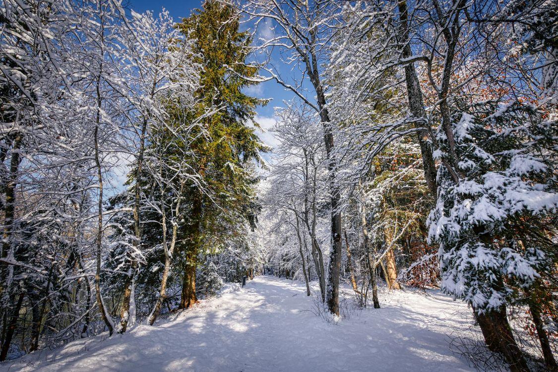 Зимняя тропинка возле реки · бесплатное фото