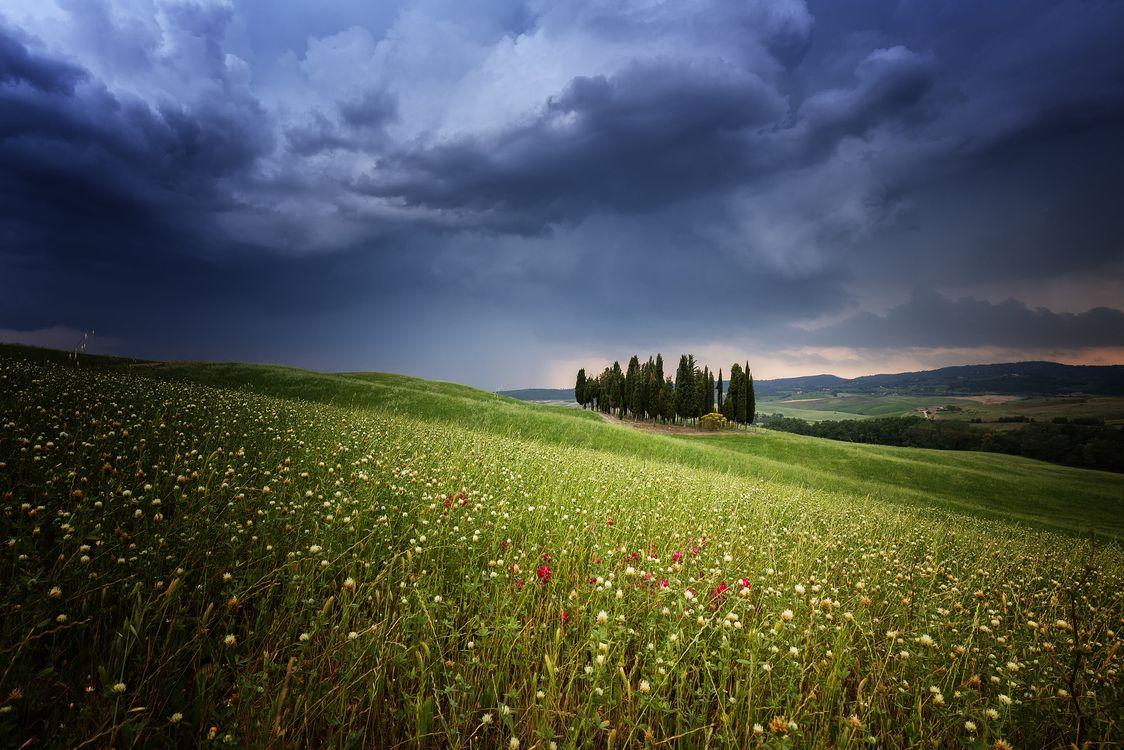 Фото бесплатно Cypress, Italien, Rain - на рабочий стол