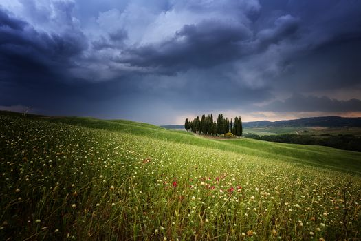 Photo free Cypress, Italien, Rain