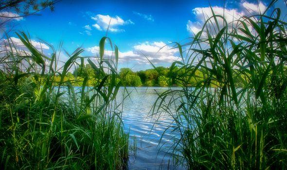 Бесплатные фото озеро,трава,камыш,лес,деревья,небо,природа