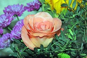 Фото бесплатно цветочная композиция, букет, цветок