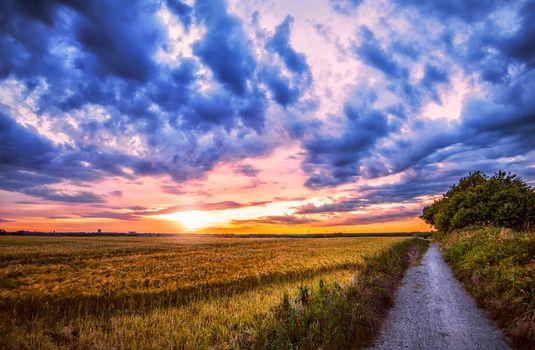 Photo free ears of corn, clouds, landscape