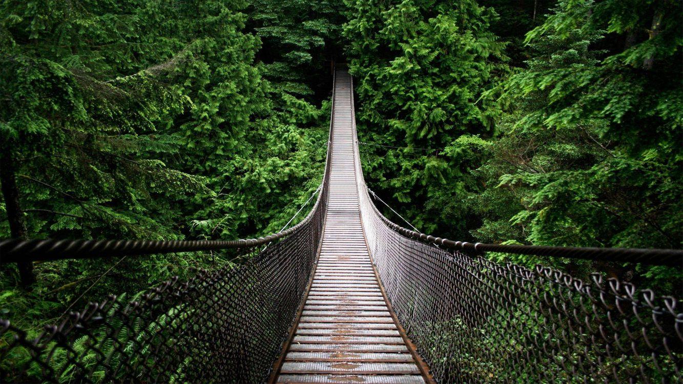 Suspension bridge · free photo
