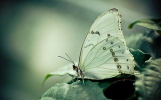 Photo free butterfly on leaf, macro, beauty