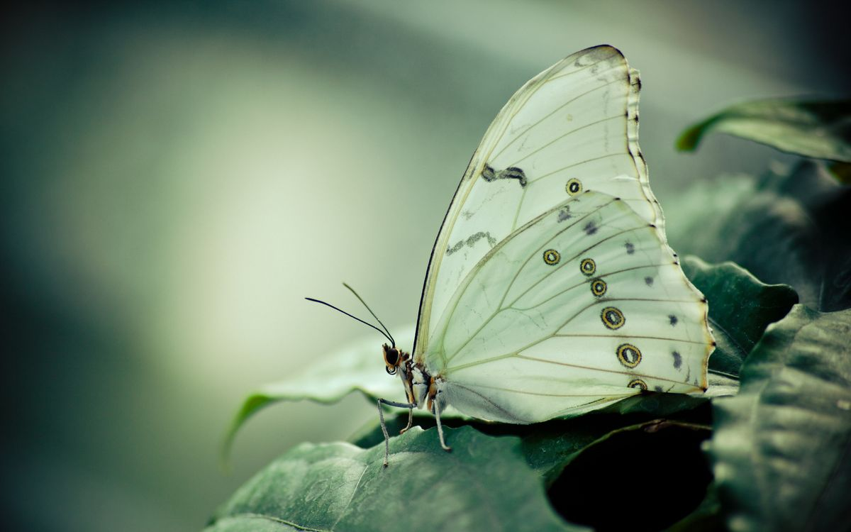 Photos for free butterfly on leaf, macro, beauty - to the desktop