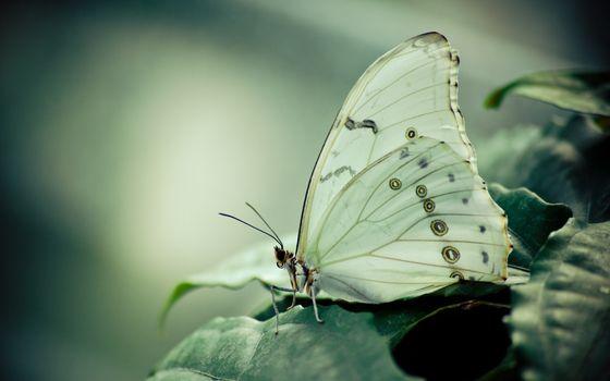 Заставки бабочка на листке, макро, красота