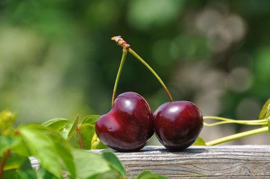Photo free cherries, leaves, fruit