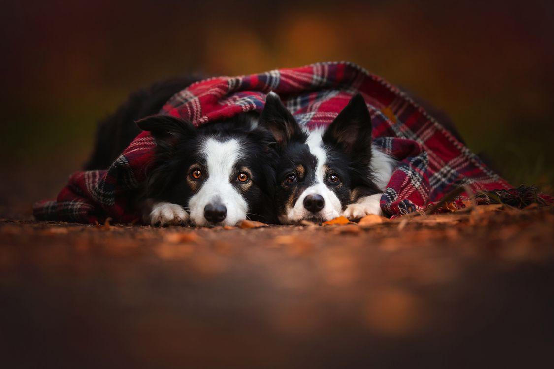 Две собаки под уютным пледом · бесплатное фото