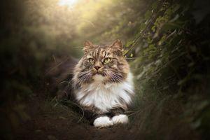 Леди кот =) · бесплатное фото