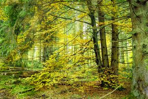 Зеленый лес и деревья · бесплатное фото