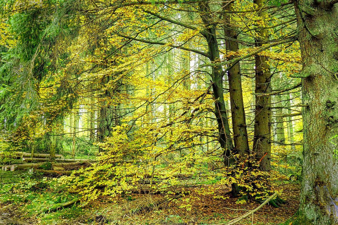 Зеленый лес и деревья · бесплатная заставка
