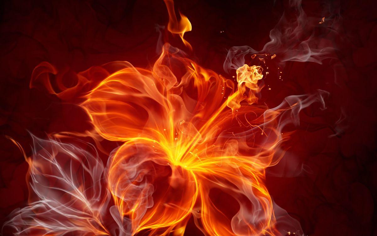 Фото бесплатно огонь, цветок, цветок из огня - на рабочий стол