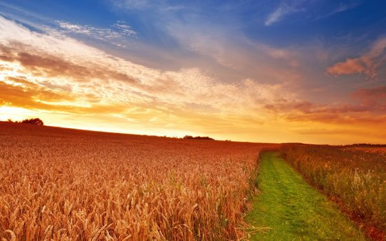 Photo free sunrise, wheat field, horizon