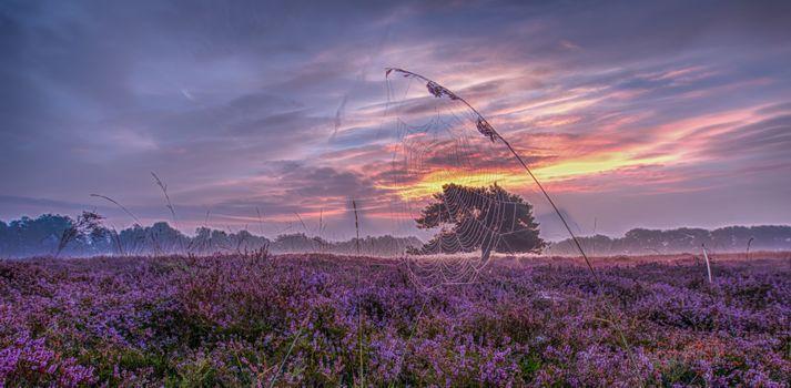 Photo free lavender field, sunset, beautiful sky