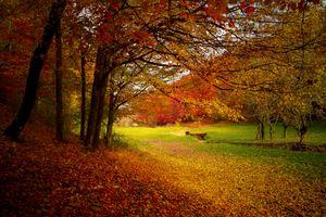 Фото бесплатно дерево, лес, филиал